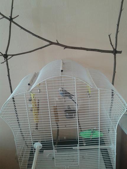 Лакомство Vitakraft Крекеры Яичные 2шт для волнистых попугаев 3294